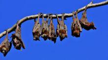 Public Health Alert has been issued regarding contact with bats.