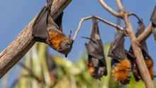 Can't touch this - heatwave bats are off limits