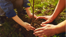 Two sets of hands, one set belonging to a small boy and the other his dad, plant a tree on a sunny day.