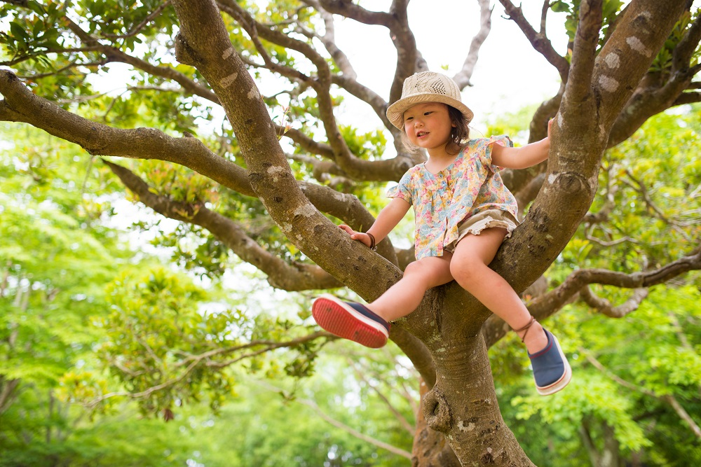 A young girl sits up in the branches of a leafy tree.
