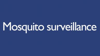 A text image that reads 'Mosquito surveillance'