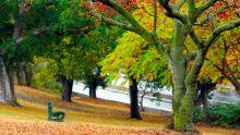 Autumn leaves in Brisbane
